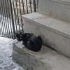 Glaring Black Cat