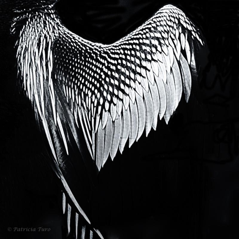 Ahinga Wing