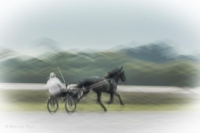 Harness Racing 3
