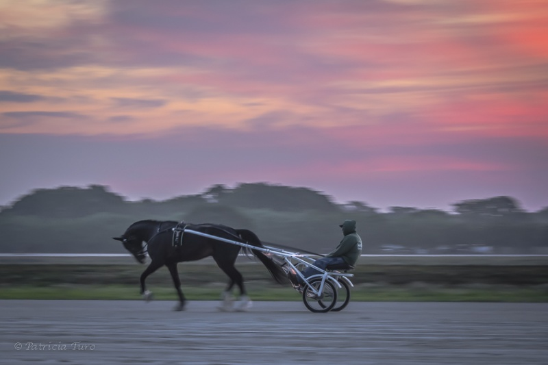 Harness Racing 57