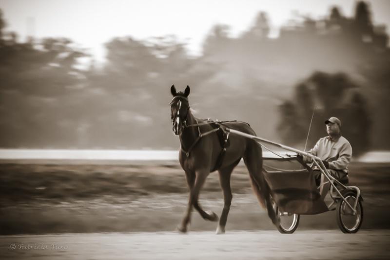 Harness Racing 58