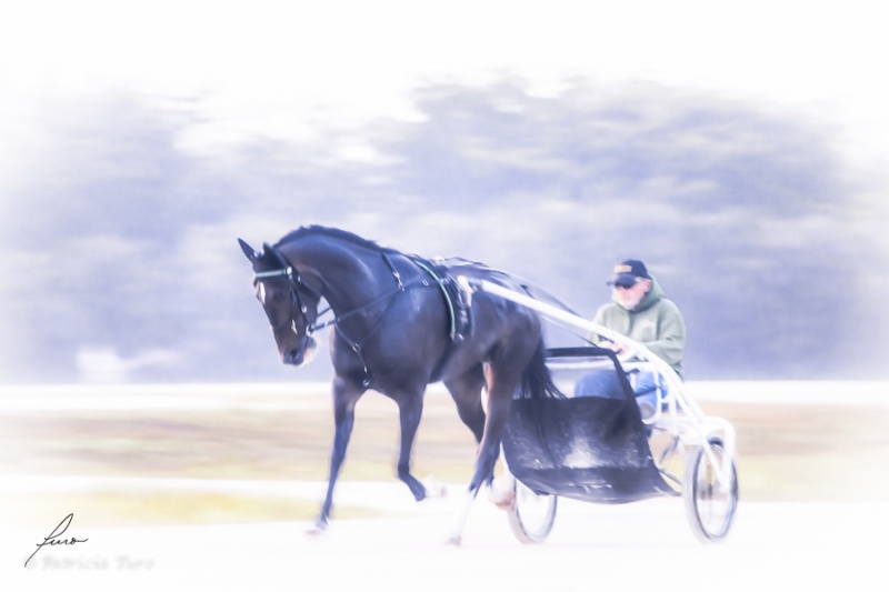 Harness Racing 12