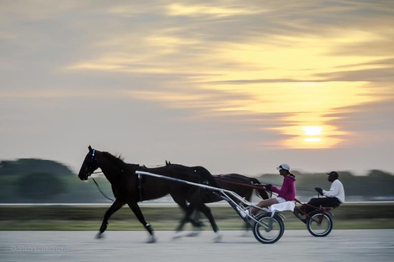 Harness Racing 15