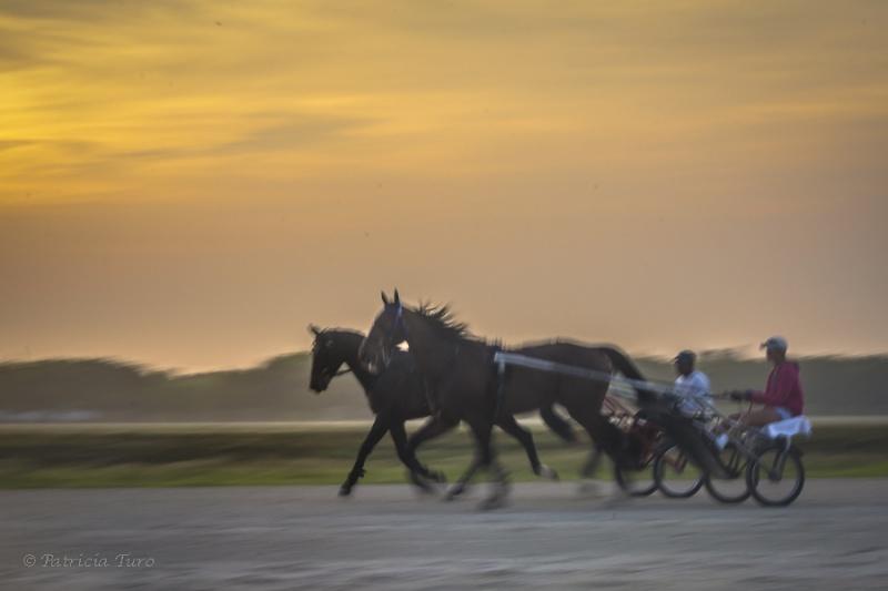 Harness Racing 17