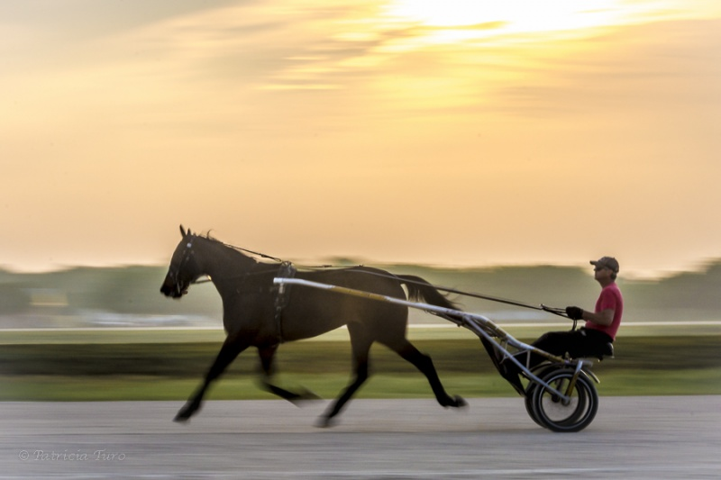 Harness Racing 23