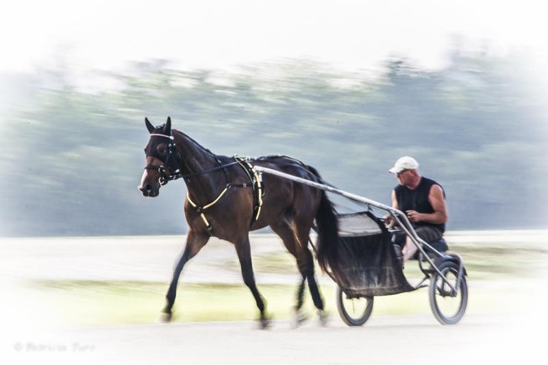 Harness Racing 14