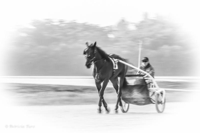 Harness Racing 25