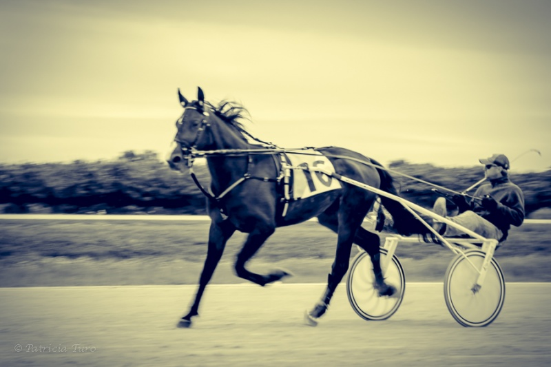 Harness Racing 36