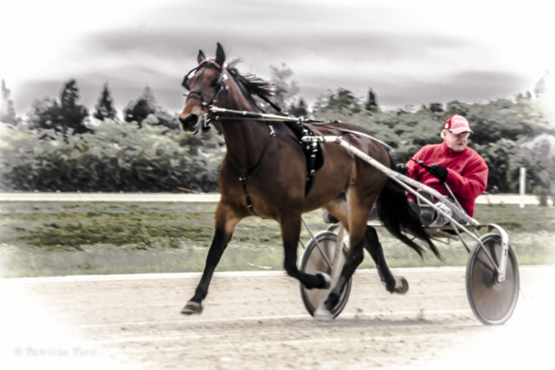Harness Racing 52