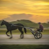 Harness Racing 7