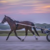 Harness Racing 11