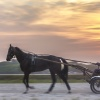 Harness Racing 14