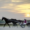 Harness Racing 15