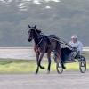 Harness Racing 19