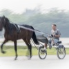 Harness Racing 24