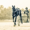 Harness Racing 27