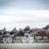 Harness Racing 60