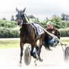 Harness Racing 61