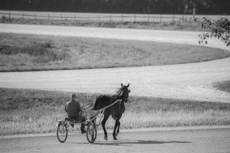 Harness Racing 82