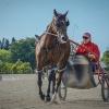 Harness Racer 22