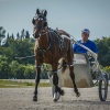 Harness Racers 26