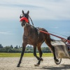 Harness Racers 27