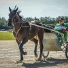 Harness Racers 28