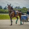 Harness Racer 51
