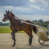 Harness Racers 30