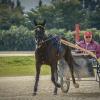 Harness Racer 29