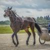Harness Racer 31