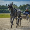 Harness Racers 31