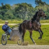 Harness Racers 34