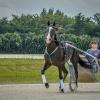 Harness Racer 41