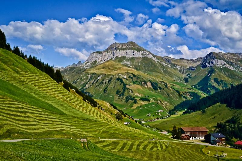 Harvest Landscape Design