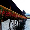 Lucerne in Summer