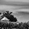 Metal Silo in Corn Fields