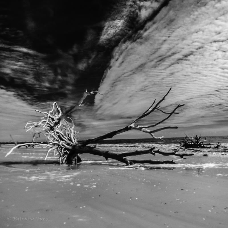 Botany Bay Beach 12-1