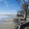 Botany Bay Beach 13